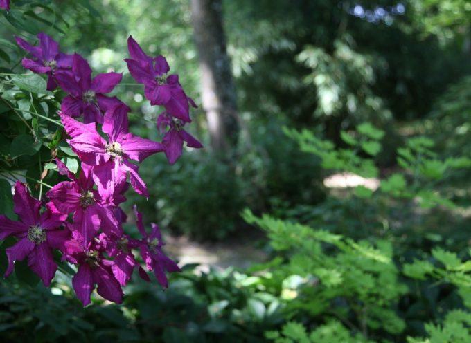Remarquable jardin