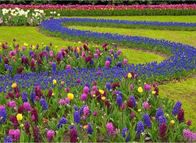 Carbonne : Concours local des maisons fleuries
