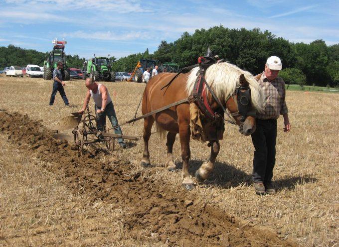 Antic Agri : le rassemblement des passionnés de l'agriculture d'autrefois.