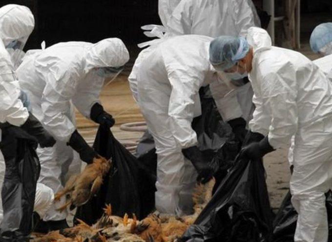 Dernière minute : Deux exploitations touchées par la grippe aviaire.