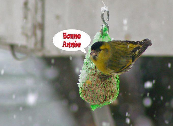 Aidons les oiseaux en hiver.