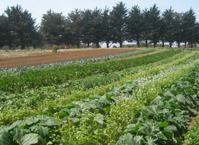 L'agro-écologie en Occitanie : 3 groupements d'intérêt économique et environnemental reconnus sur notre territoire.