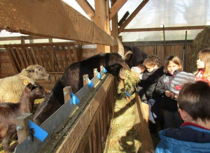 Les fermes ouvertes autour de Cazères ce week-end