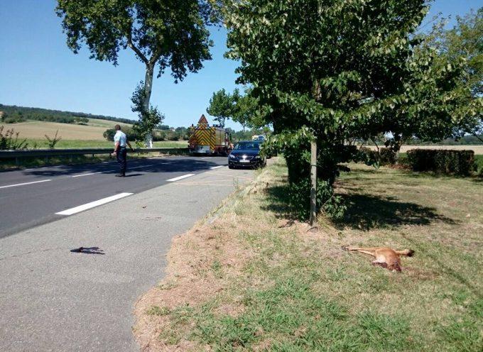 Un motard grièvement blessé après avoir percuté un chevreuil à Beaumont sur Lèze.