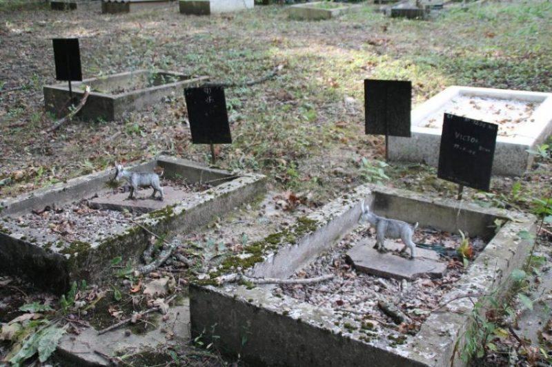 Il y a même 2 chèvres enterrées