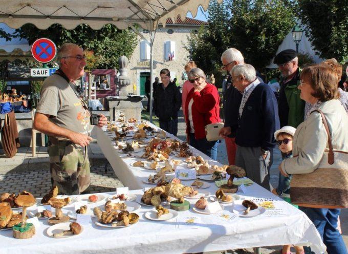 Salon du champignon au centre culturel du Pilat à Saint-Gaudens