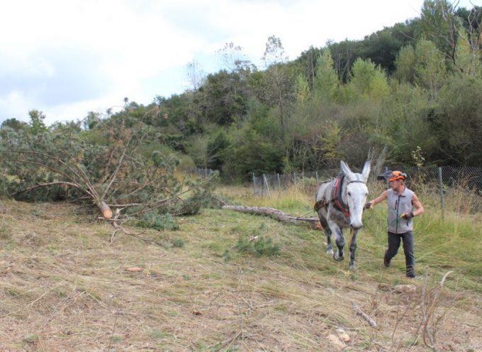 Saint-Gaudens : Des animaux travaillent pour le SIVOM!