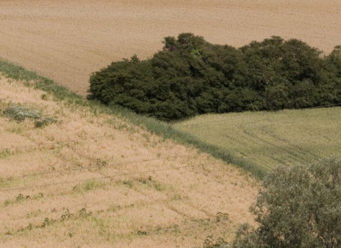 Présentation du programme de plantations de haies agricoles