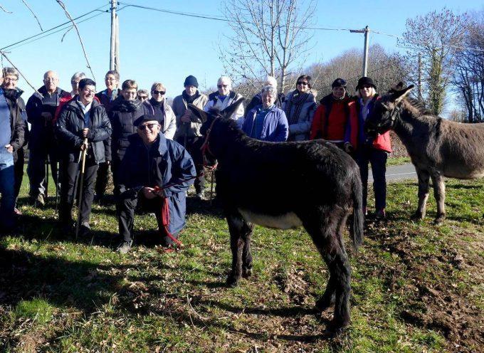 Balesta : Marcher avec les ânes