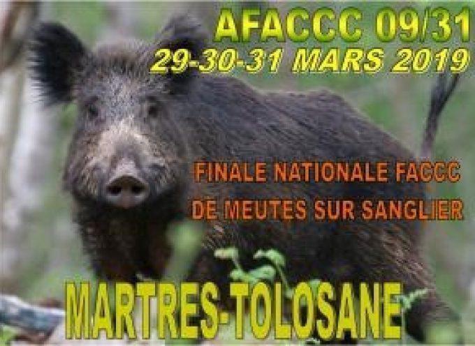 Finale Nationale de meutes sur sanglier à Martres Tolosane