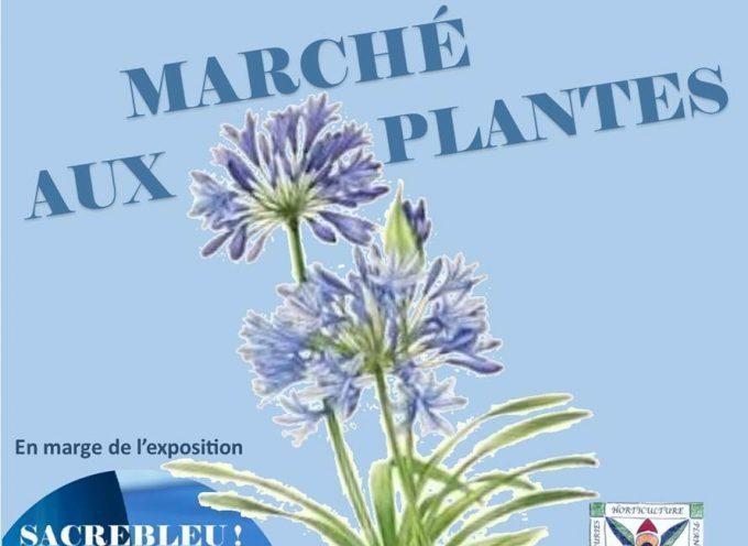 Martres-Tolosane : Marché aux plantes