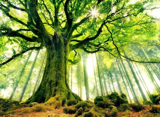 Des obsèques écologiques: La cinération en Comminges