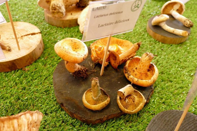 Très bon champignon