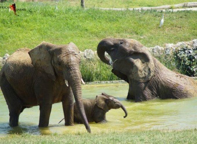 Plaisance du Touch : Réouverture du zoo African Safari