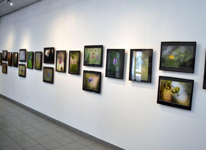 Montréjeau : Alain Gaboriau à l'espace André Marquerie