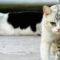 Rieumes : Campagne de capture de chats errants