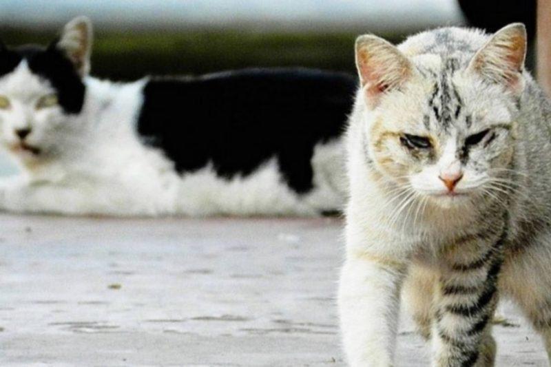 Deux chats errants vont être capturés