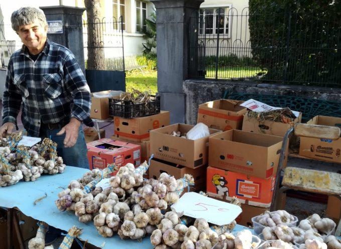 Montréjeau : Un été au marché, l'ail, l'oignon, l'échalote de Serge