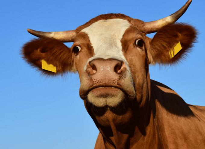 Le Fousseret : Grande foire agricole, artisanale et commerciale