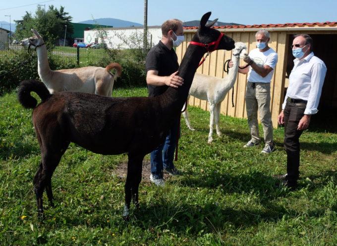 Montréjeau : Mistral, Terco, Francis, trois nouveaux résidents à l'Ehpad du Montroyal