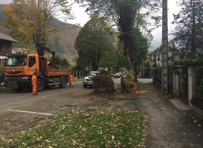 COMMUNIQUE : Abattage d'arbres en fin de vie sur Luchon