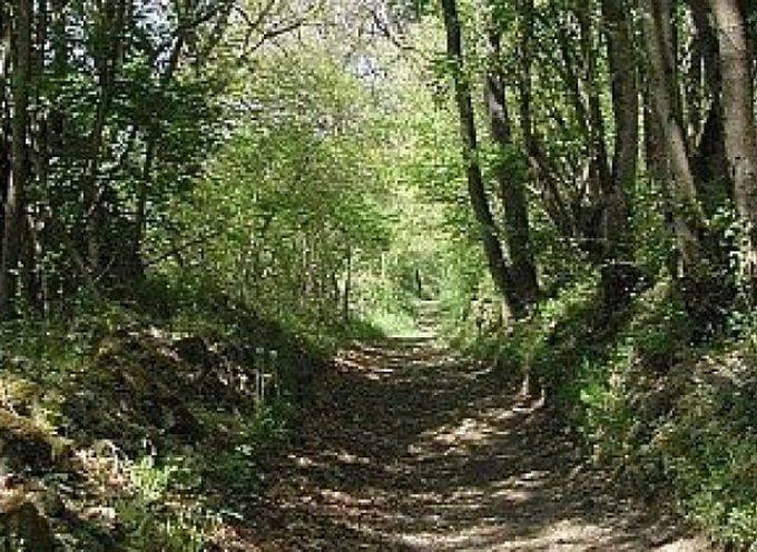 Trail, allons courir après nos auri'gines