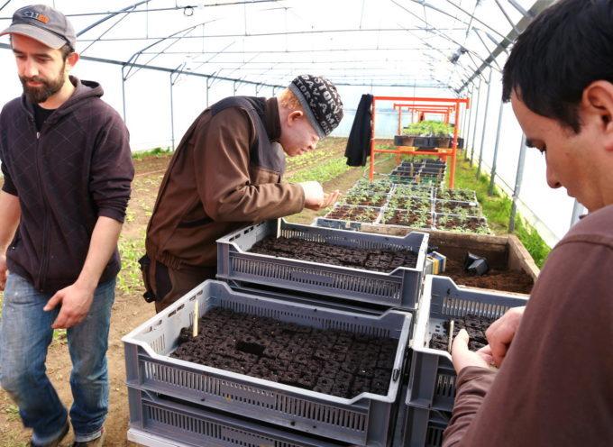 Obligation d'emploi des travailleurs handicapés – l'Urssaf et la MSA, nouvelles interlocutrices aux côtés de l'Agefiph