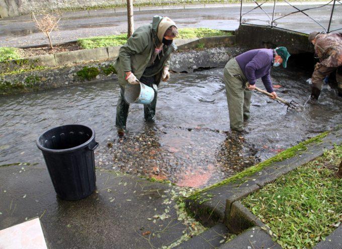 Montréjeau : AAPPMA, 400.000 œufs de truite dans les cours d'eau