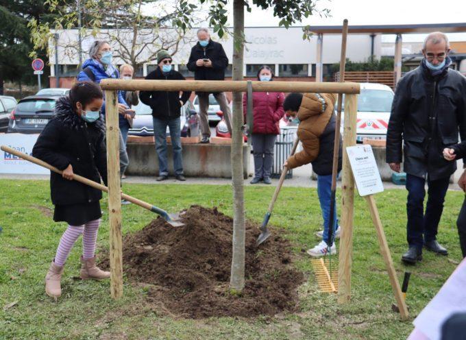 Muret célèbre la Laïcité en plantant un nouvel arbre