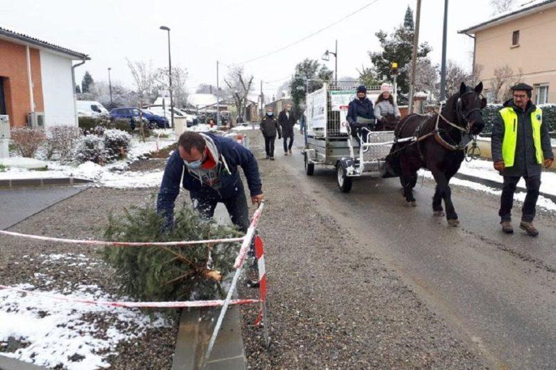 La municipalité de Bérat a organisé une collecte des sapins en charrette à cheval