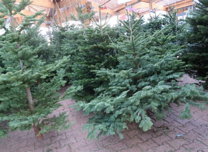 Un point de collecte des sapins de Noël à Rieux
