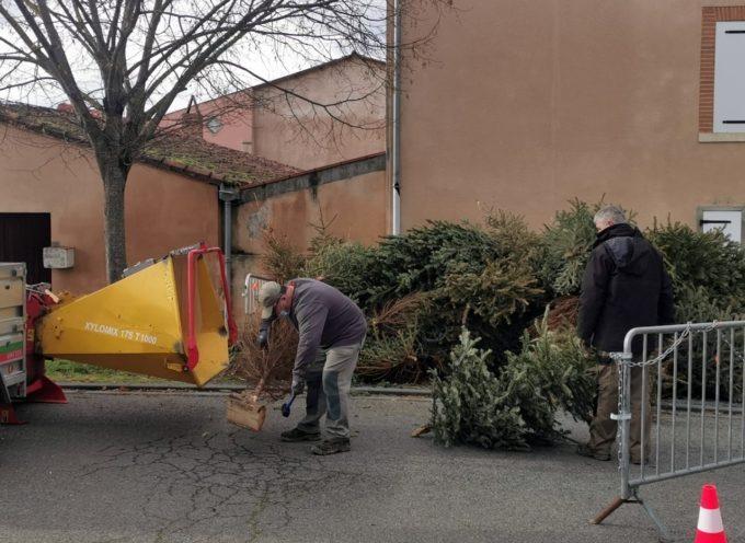 Recyclage des sapins de Noël à Rieux