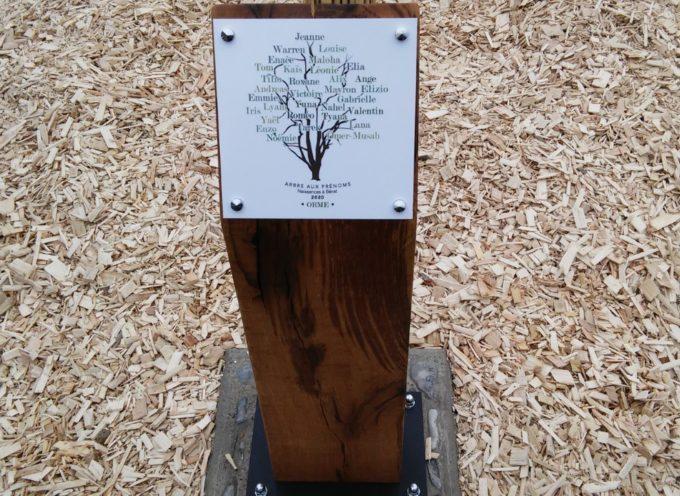 Bérat : l'arbre des naissances