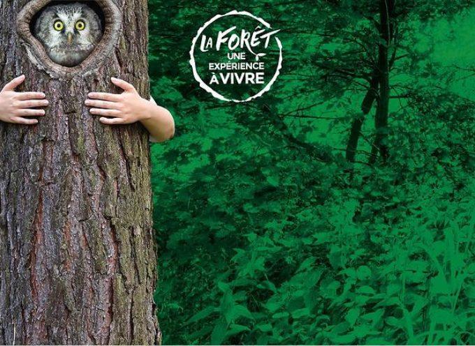 Dimanche 21 mars, journée internationale des forêts