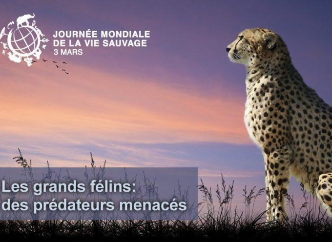 Mercredi 3 mars, journée mondiale de la vie sauvage