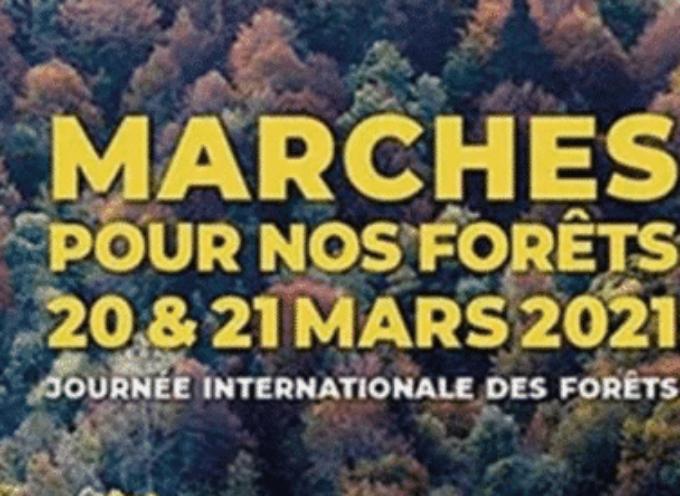 Journée internationale des forêts à Saint-Gaudens et Valentine