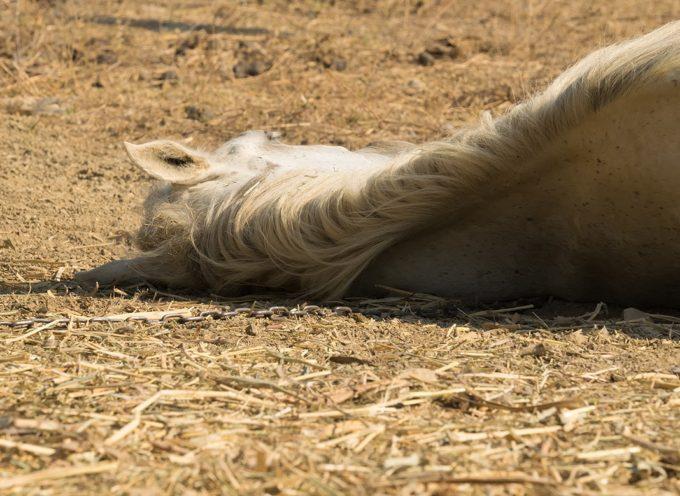 Un cheval abattu d'un coup de fusil à Mauran