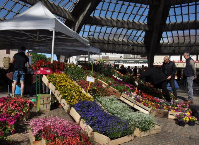 Montréjeau : Marché aux fleurs et aux plants