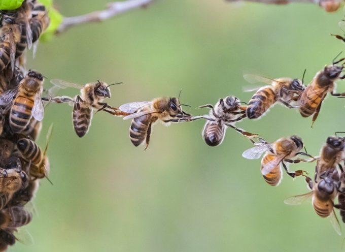 Jeudi 20 mai, journée mondiale des abeilles