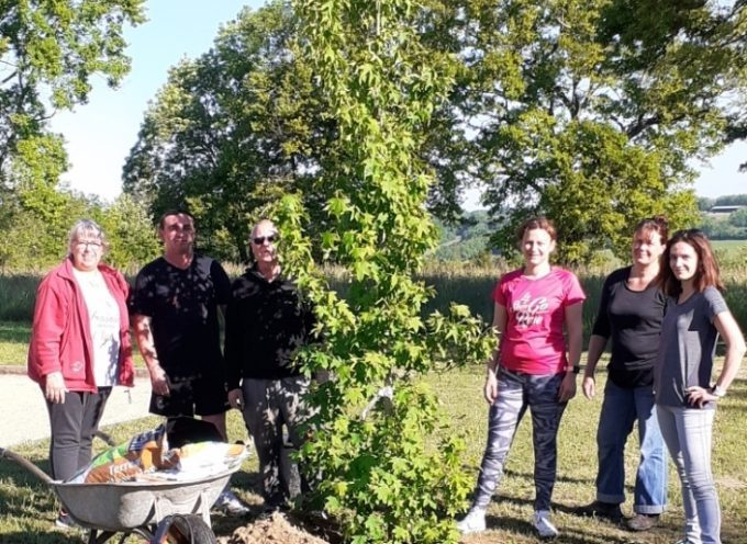 Le Cuing : Trois arbres pour la devise de la République française