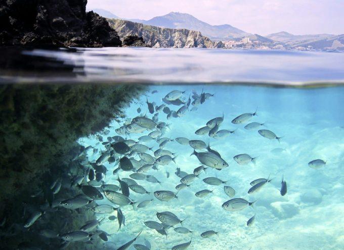 Mardi 8 juin, journée mondiale des océans
