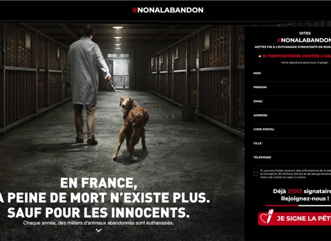 Samedi 26 juin, journée mondiale contre l'abandon des animaux de compagnie
