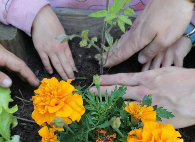 """Les résultats du concours """"Les P'tits jardins gourmands"""" à l'école d'Arbas"""